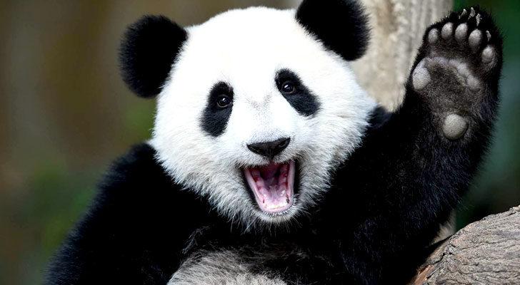 vivirdeingresospasivos.net ganador concurso SEO raiola manda y no el panda